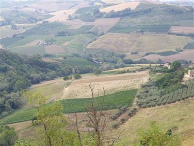 agricolo - vigneto a carassai