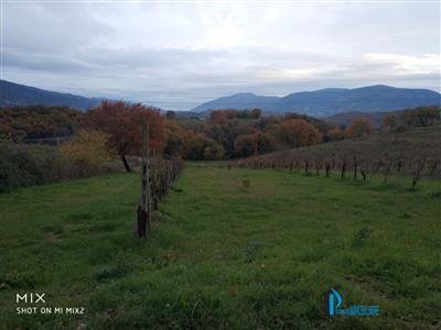 5147948_vendita-terreni-terni-rif-gff-1416-vicinanze-collescipoli-terreno-agricolo-con-vigna-puinn0tb.jpg